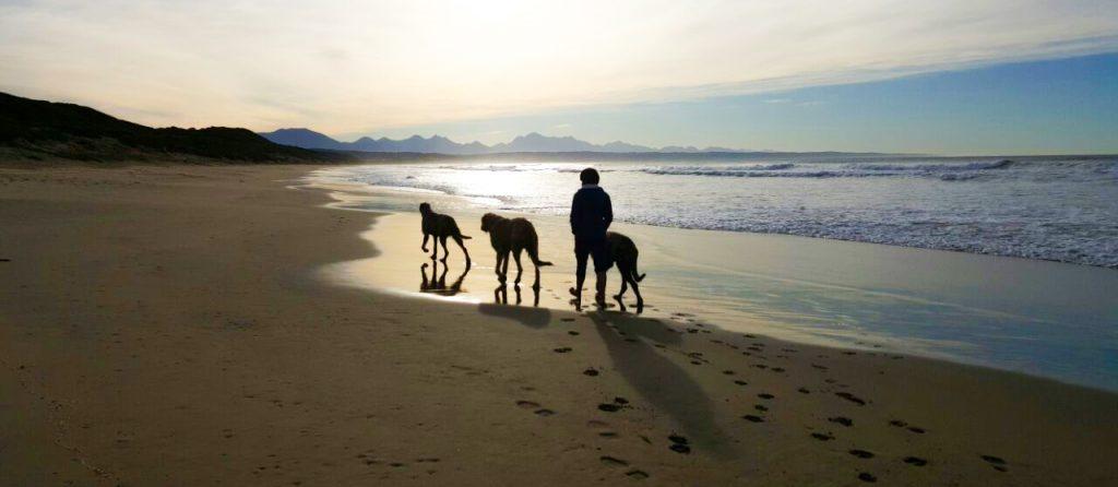 Irish Wolfhounds in SA